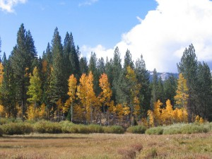 Meadow in Fall